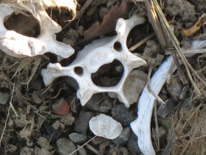 This bone looks pretty happy, actually.